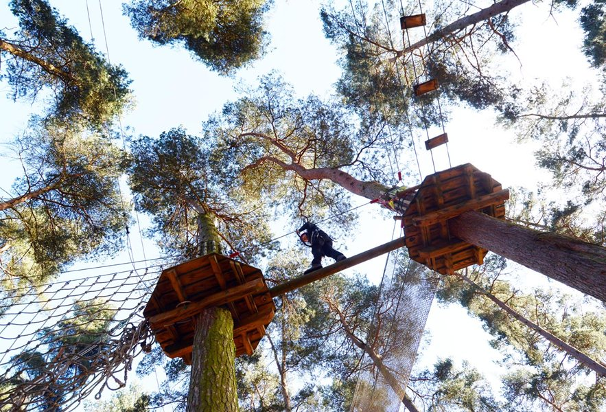 Go Ape course at Cannock Chase