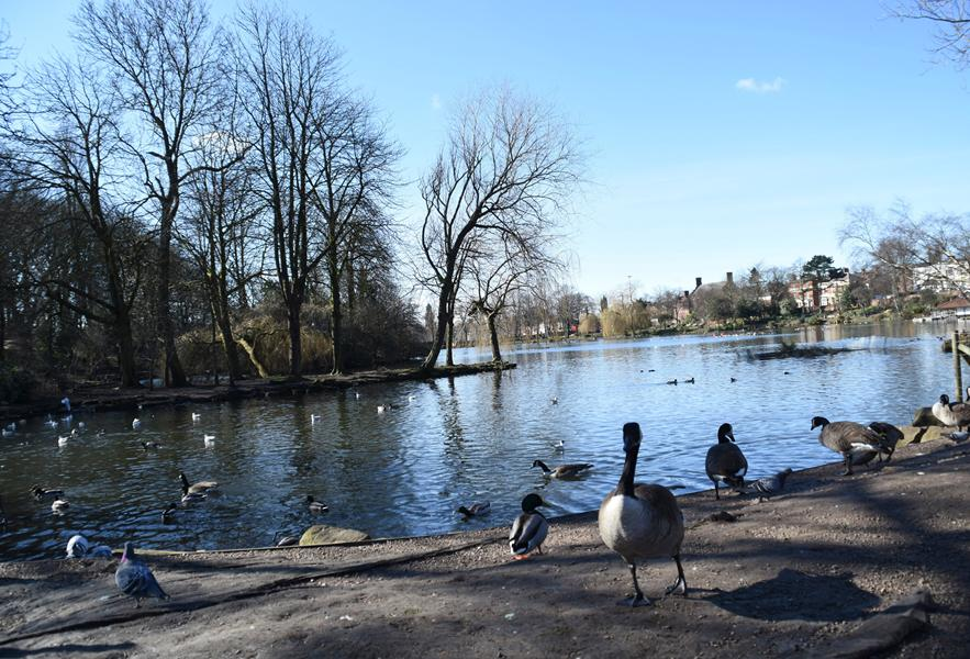 Waterside views at Walsall Arboretum
